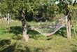 hammocks under the walnut trees