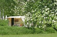 © Homepage www.camping-millefleurs.com/